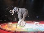 2013 Circus